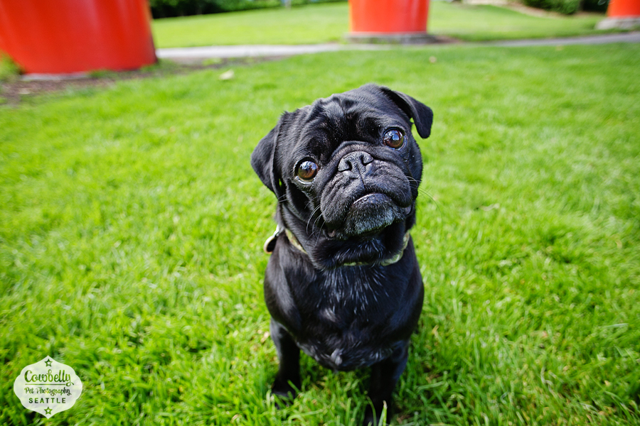 pug-party-030