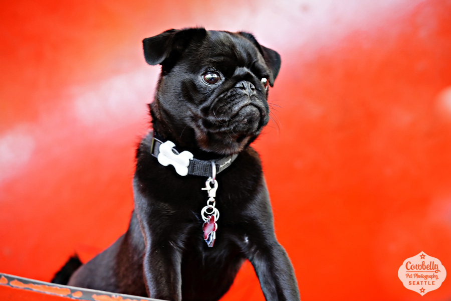 pug-party-039