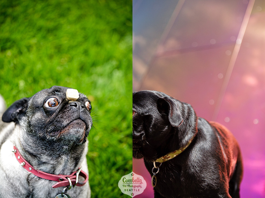 pug-party-048