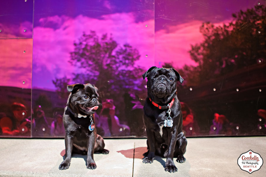 pug-party-070