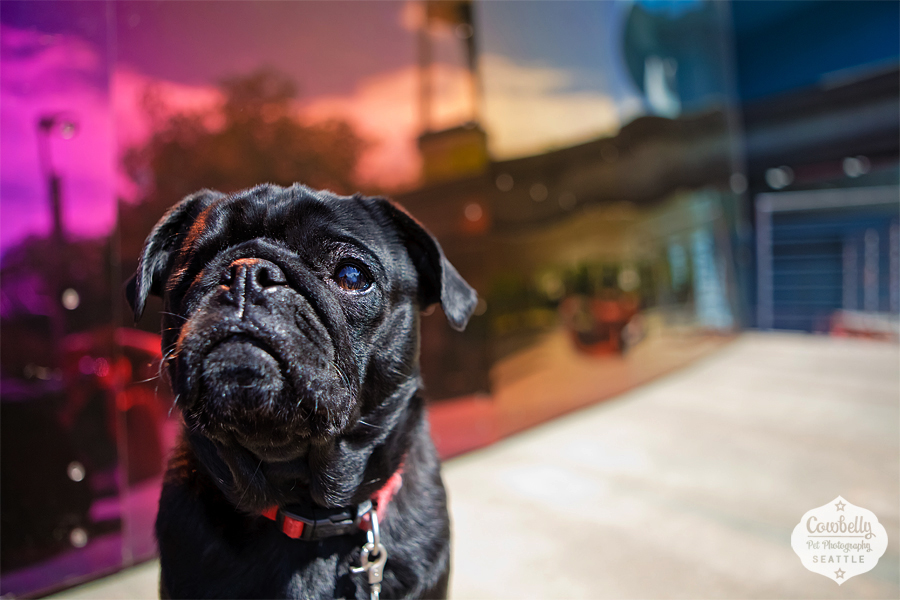 pug-party-0711