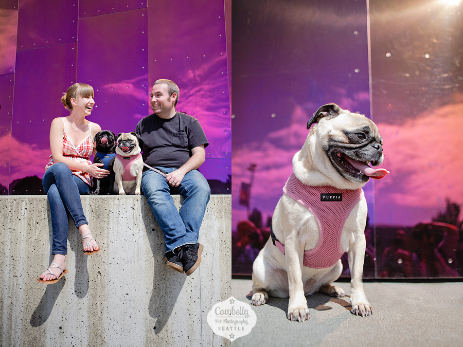 pug-party-100