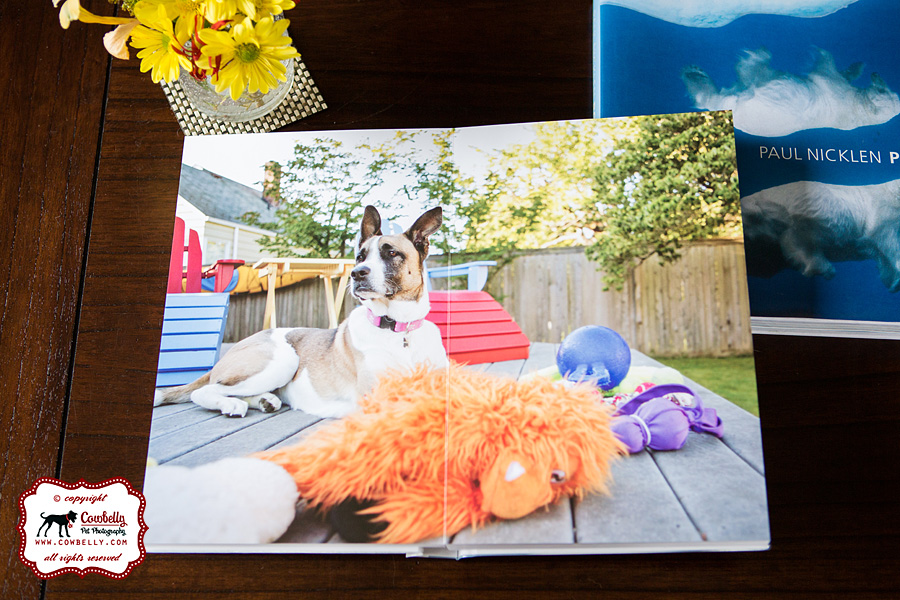 cowbelly pet photography seattle 8x12 photo book of dog images of Molly Ringwald