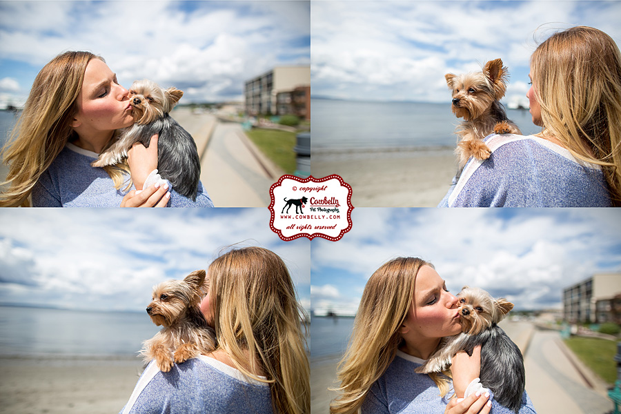 Ellie and Dudley yorkies with their mom in Edmonds