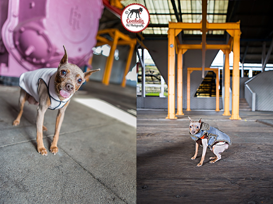 dog photography in seattle by jamie piper