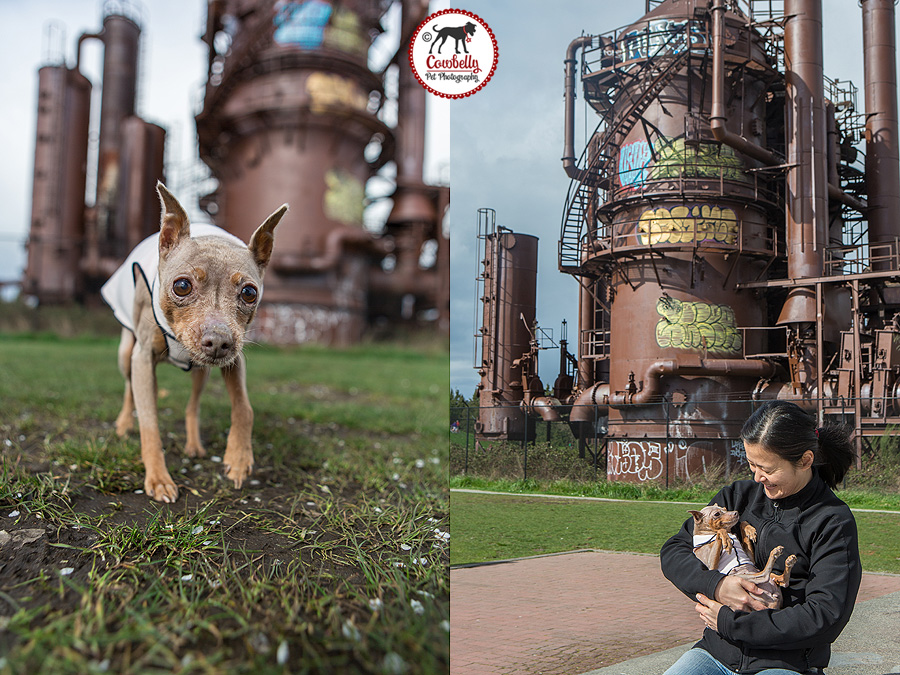 seattle pet photography by jamie piper