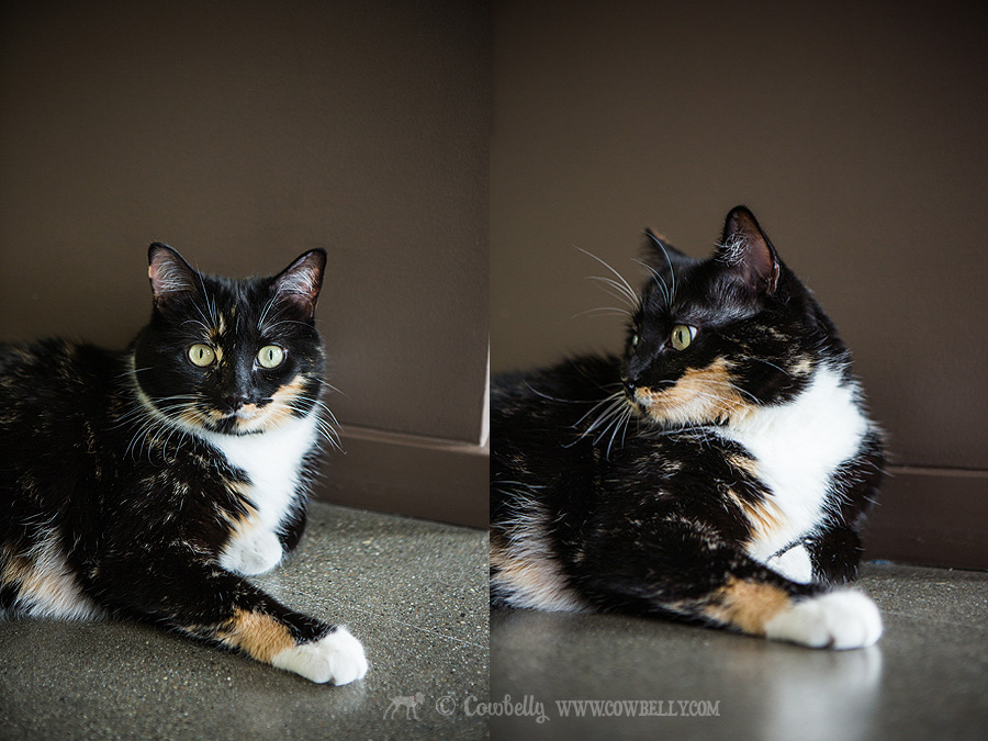 seattle cat photography