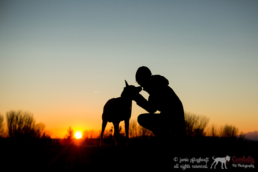 Penny-52-copyright-cowbelly-pet-photography