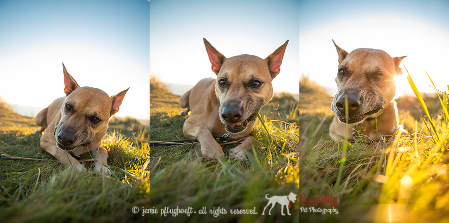 penny-triptych-copyright-cowbelly-pet-photography