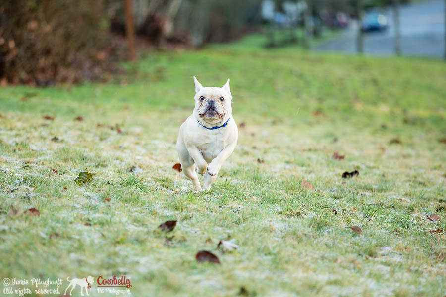 mukilteo pet photography by cowbelly