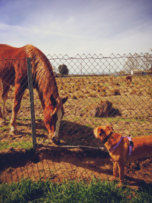 Fergie made a friend at a rest area in California farm country.
