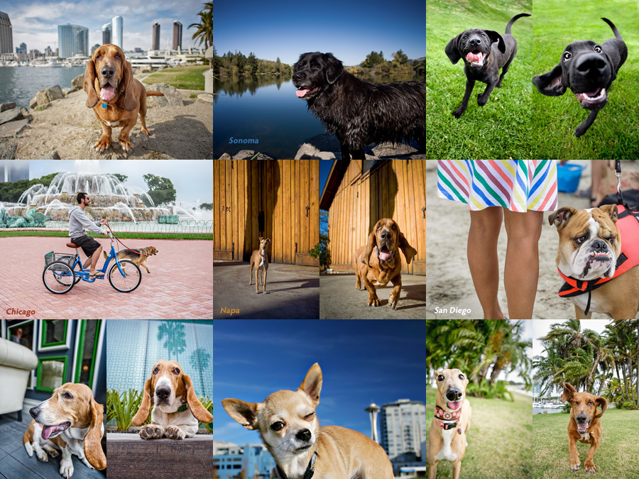jacksonville florida pet photography