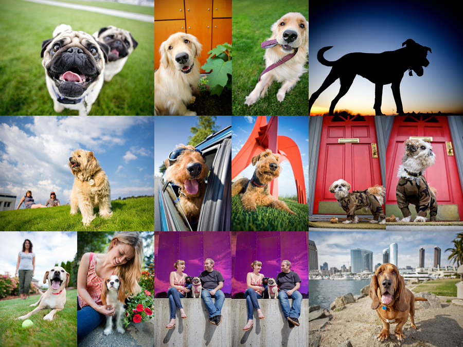boston pet photography