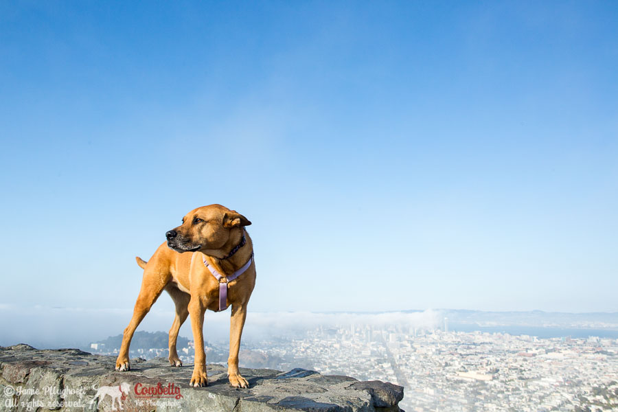 san francisco pet photography
