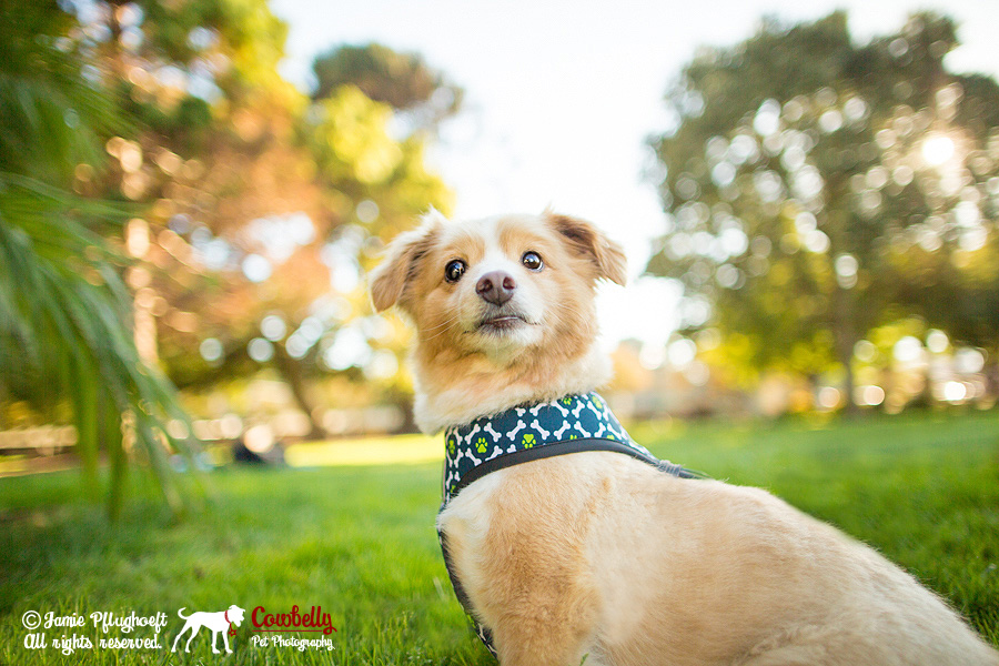 san mateo pet photography