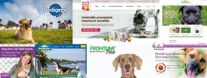Commercial Tearsheets for dog model projects