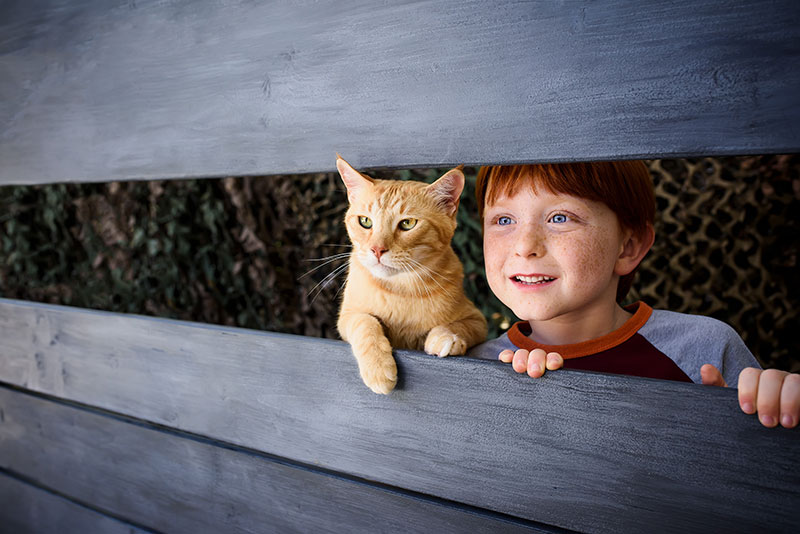 commercial animal photography- cat photography