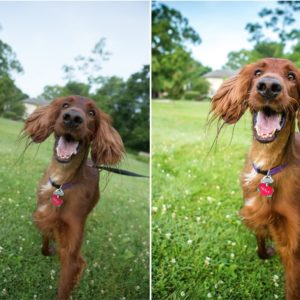 Services for Pet Photographers